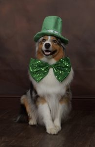 Seven all dressed up for St. Patrick's Day
